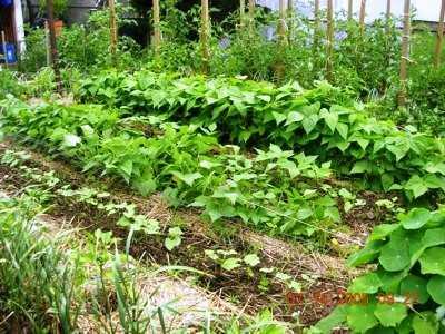 Companion Planting helps bring a balanced ecosystem Spain Info – Garden Companion Planting