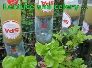 Lettuce-Cellery Bottle Tower