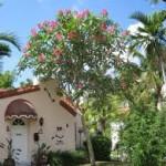 gardening Plumeria-Tree