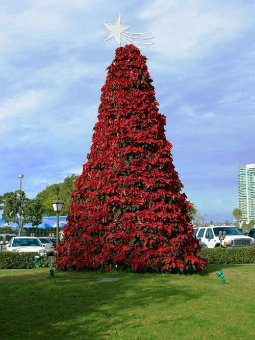 Poinsettia Christmas tree