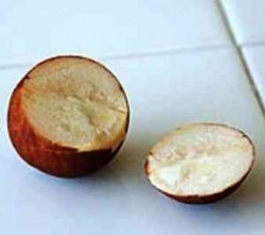 avocado-step_3 Avocado