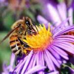 gardening bees-Pollinating bee, 5