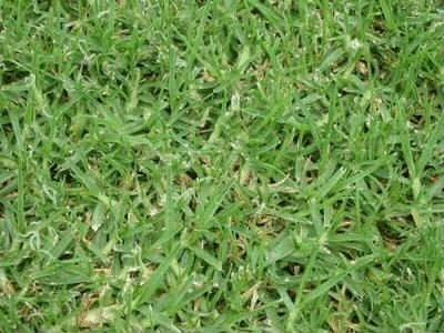 benissa green Green Lawns
