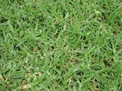 Spanish Green Lawns