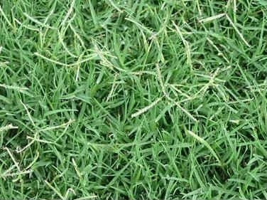 Green Lawns benissa silver grey