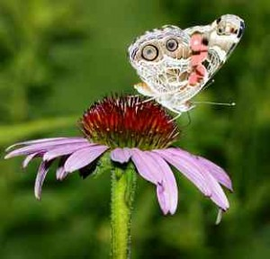 BUTTERFLY Butterfly Garden Spain