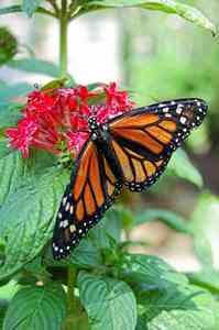 Butterfly Gardens Spain