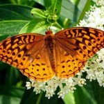 gardening Butterfly-Gardens-Spain