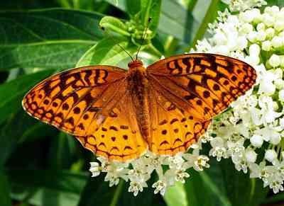 Butterfly-Gardens-Spain