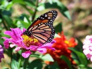 Butterfly Garden Spain