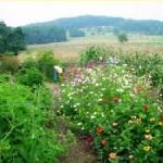 gardening companian gardening mixed