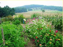 companian gardening mixed companion planting