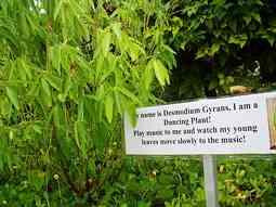 Dance Plant flower sign