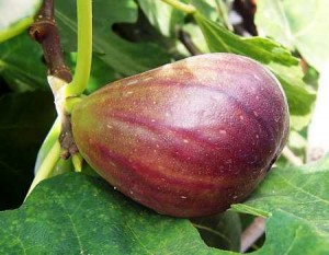 Fig 1 figs