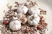 garlic-group