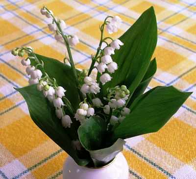 lilly-of-the-valley