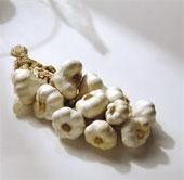 mature-garlic bulbs