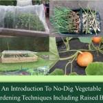 gardening no dig garden