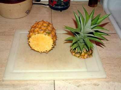 Pineapple PROPERGATION