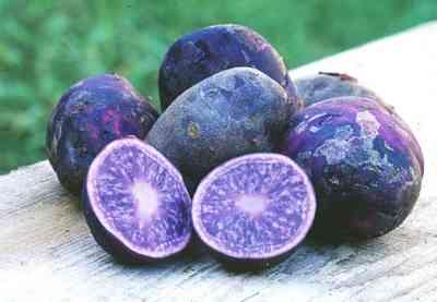 potatoes Blue potatoes
