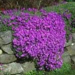 gardening rockery-1