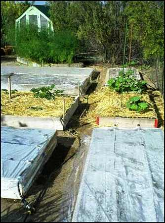 soil Solarizing, soil solarization