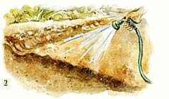 soil solarization STEP 2
