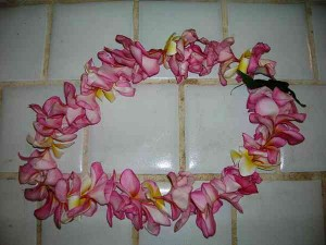 Tree Plumeria lei Plumeria Tree