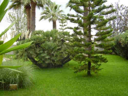 Green Lawns Tropical Garden lawn