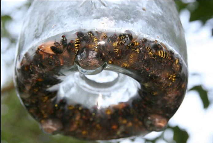 wasp-trap-4 wasp traps