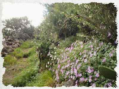 Guided Walks Tenerife Beautiful Lush Green Hiking Trails