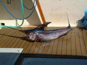 Swordfish Fishing Info