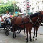 horse-carriege-torrevieja Daily Outings