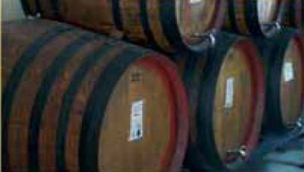 Barrels bodega los carmelos