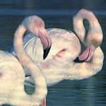 Santa Pola Flamingos Daily Outings