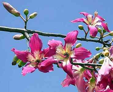 silk-Pink flowers