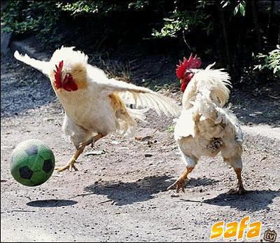 Chicken-Football