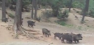 Wild Boar Regional Park Sierra Espuna