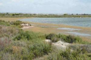 Regional Park San Pedro del Pinatar