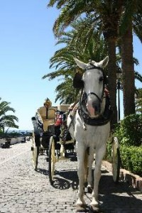 horse-and-carriage-puerto-banus Puerto Banus Marina
