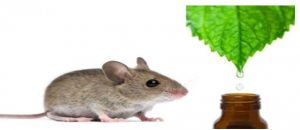 rodents and mint