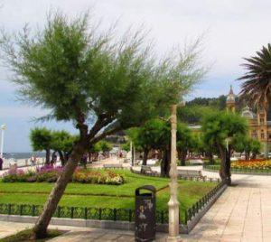 Tamarind Tree San Sabastion