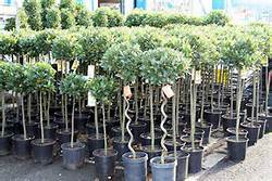bay trees nursery