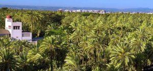 Elche-Palms Elche Hotels
