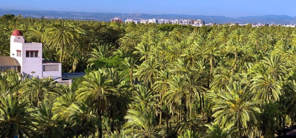 Elche-Palms