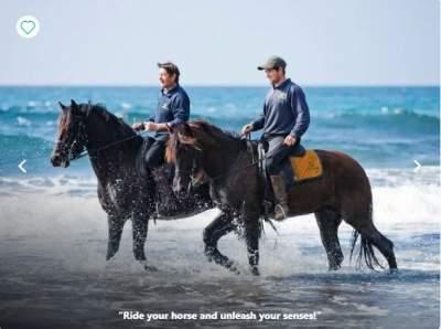 Equestrian breaks