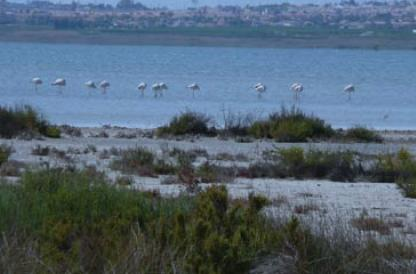 La Mata Birding
