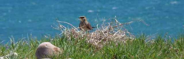 Bird Watching Costa Blanca