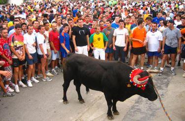 Chiva Fiesta del Torico